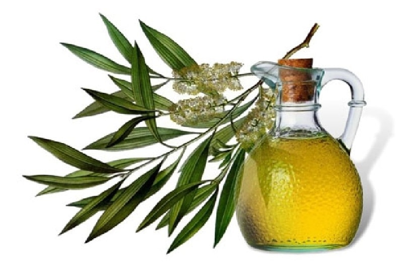 the-tea-tree-oil