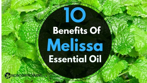 Top 10 Benefits Of Melissa Essential Oil And How Can You Use It?